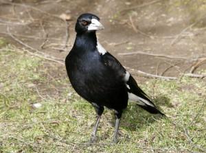 Vicious, vicious bird